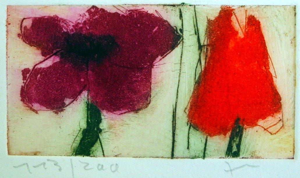 Anemone/Tulpe