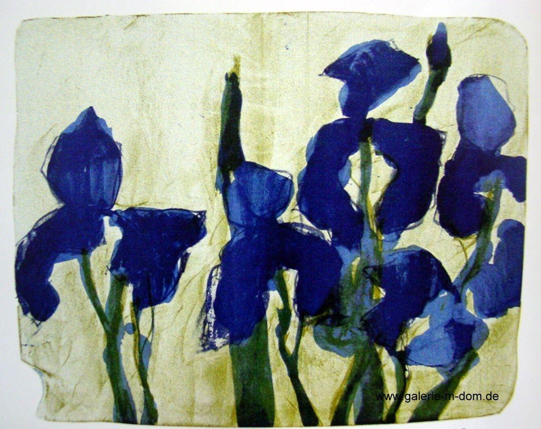 Iris 2003