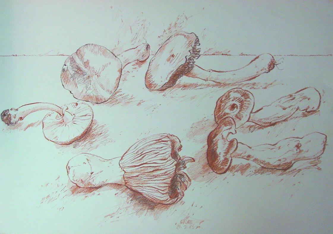 Sechs Pilze