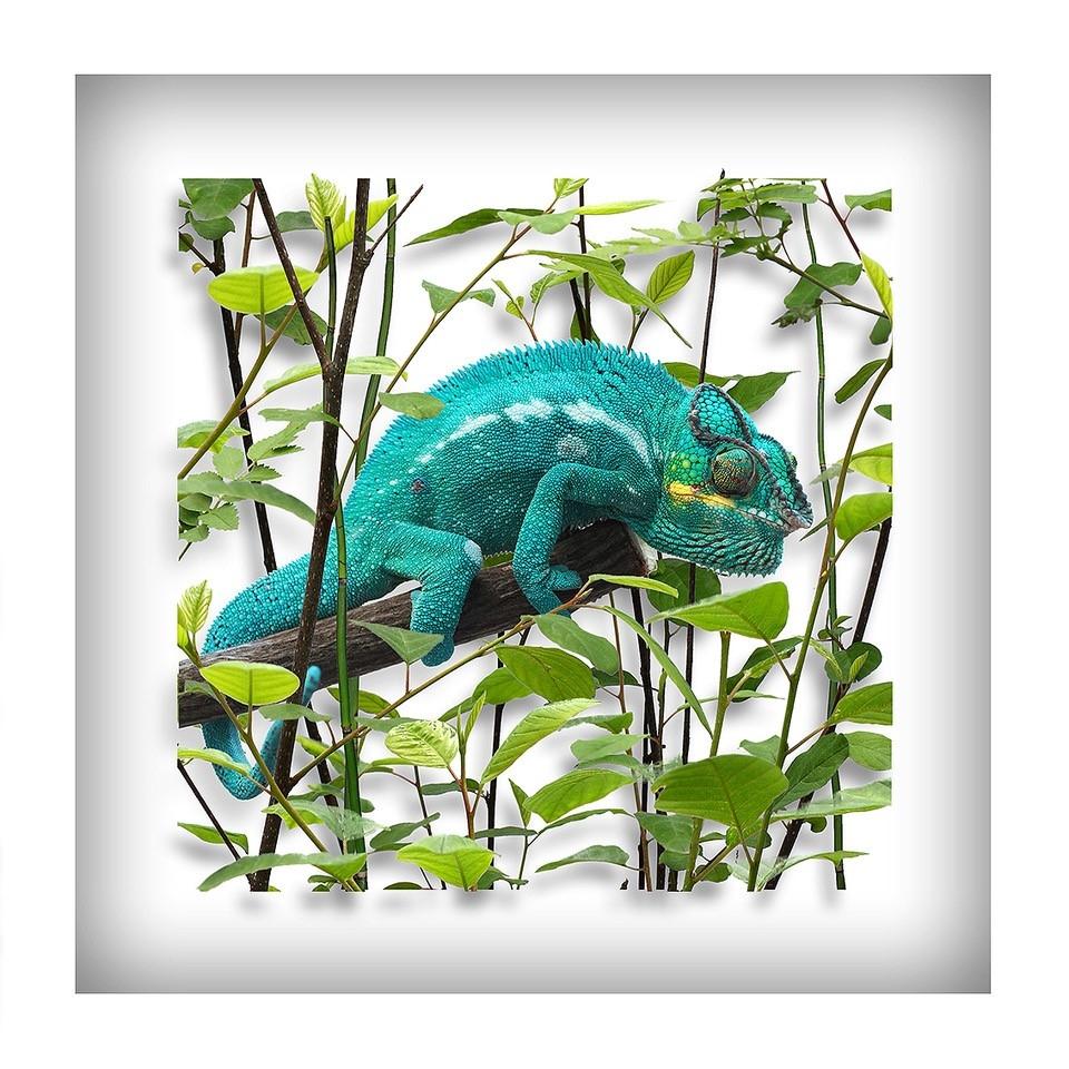 Gecko (türkis)
