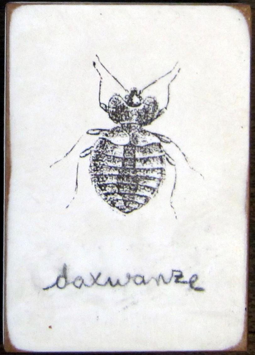 Schädling - Daxwanze