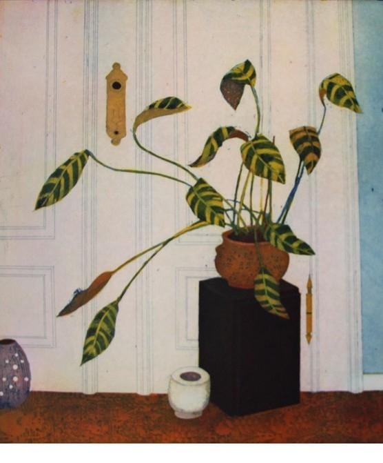 An eine Zimmerpflanze