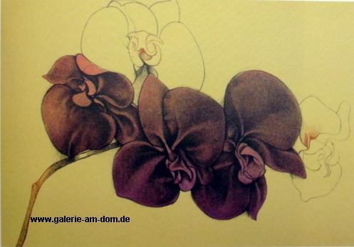 Orchidea für SW