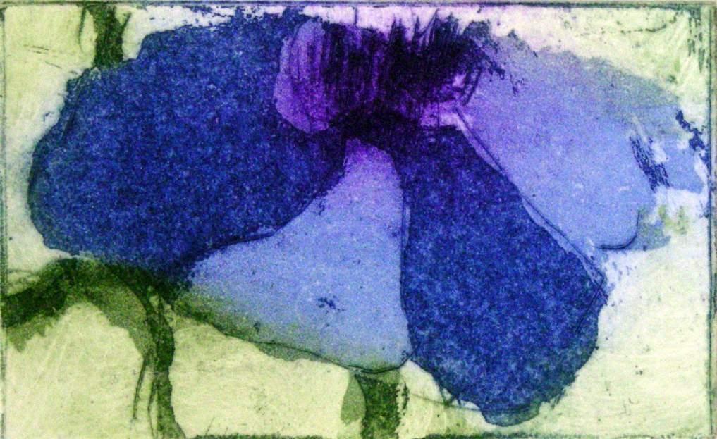 Anemone (blau)