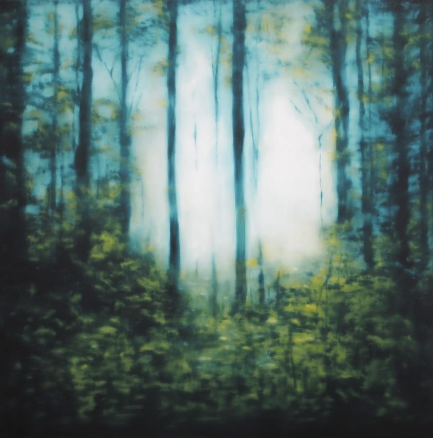Wald (881) 2012