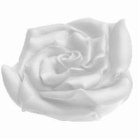 Rose - weiß, signiert