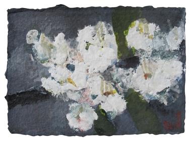 Kirschblüten weiß 2010